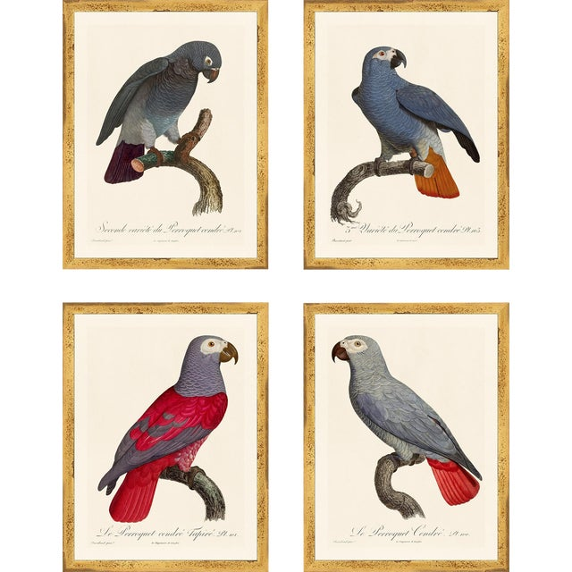 Jacques Barraband Grey Parrots Framed - Set of 4 For Sale