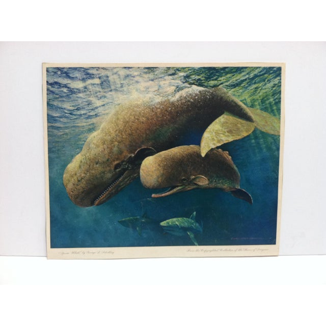 """1960s Vintage """"Sperm Whale"""" Color Animal Print by George L. Schelling Circa 1960 For Sale - Image 5 of 5"""
