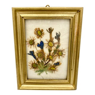 Mid Century Framed Austrian Pressed Botanicals For Sale