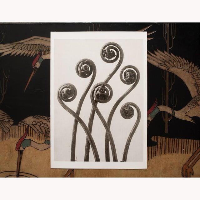 "Contemporary 1995 Karl Blossfeldt, ""Maidenhair Fern"" Original Poster For Sale - Image 3 of 6"