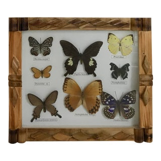 Vintage Butterfly Display in Handmade Frame For Sale