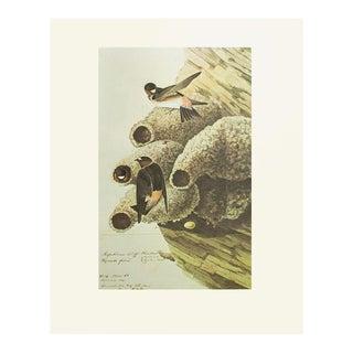 1966 Cliff Swallow by John James Audubon, Cottage Style Print For Sale