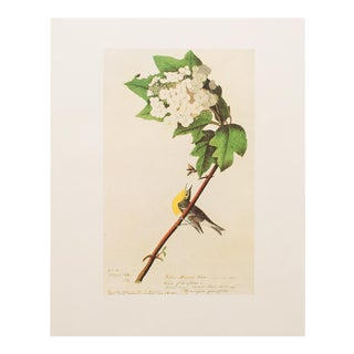 1960s Cottage Lithograph of Yellow Throated Vireo by Audubon