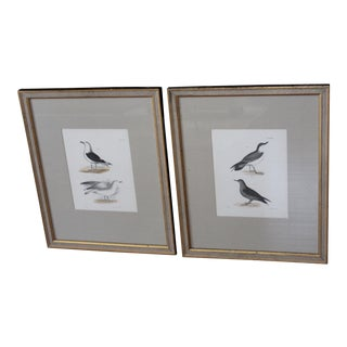 "Vintage ""Birds of New York"" Engravings - A Pair For Sale"