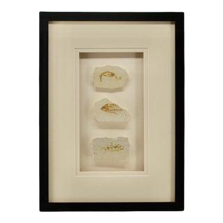 Fish Fossil Framed Coastal Look For Sale