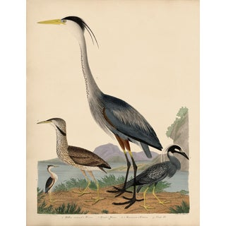 Alexander Wilson Blue Heron and Other Shore Birds For Sale