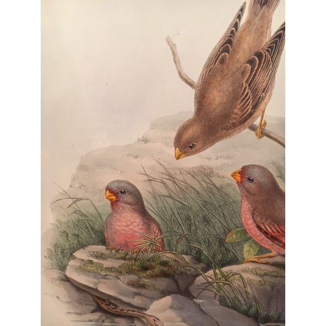 John Gould & William Hart Bird Illustration in the Age of Darwin For Sale - Image 4 of 11