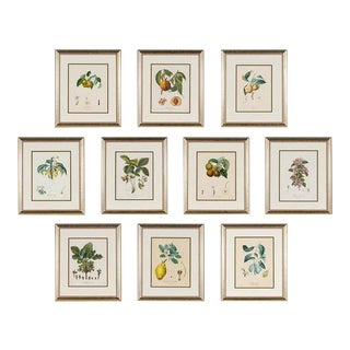 Ten Hand-Colored Color Stipple Engravings From Traite Des Arbres Fruitiers For Sale