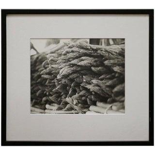 Asparagus Black and White Photograph