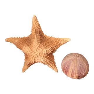 Ben Rickert Ceramic Sea Urchin and Starfish