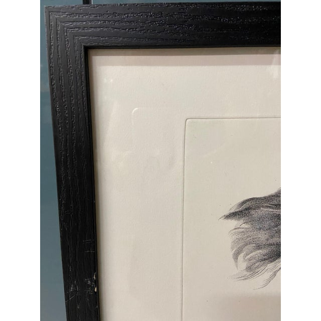 Framed pen and ink illustration. This sketch compares the physiognomies of man and eagle reinforcing Charles Le Brun's...