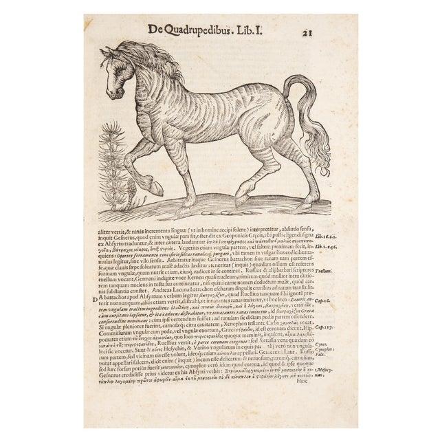 17th Century Illustrated Vellum Book, Ulisse Aldrovandi's De Quadrupedibus Solidipedibus For Sale - Image 4 of 7