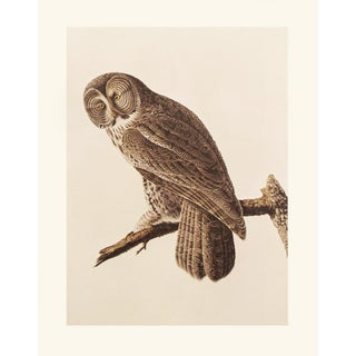 Great Gray Owl by Audubon, 1966 Vintage Cottage Print For Sale