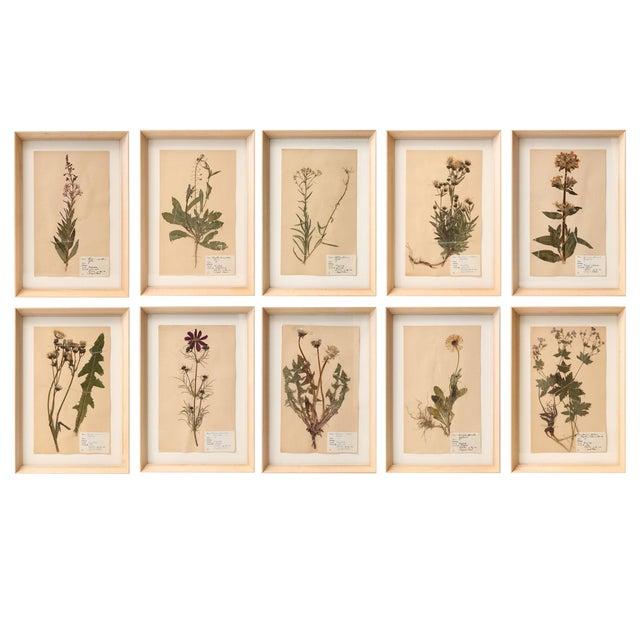 Ten Vintage Swedish Herbaria For Sale