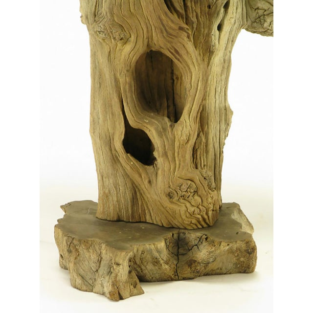 Driftwood Table Lamp with Live Edge Wood Base - Image 6 of 6