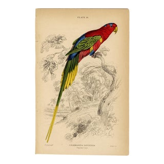"""""""Charmosyna Papuensis"""", Original 19th Century Engraving For Sale"""
