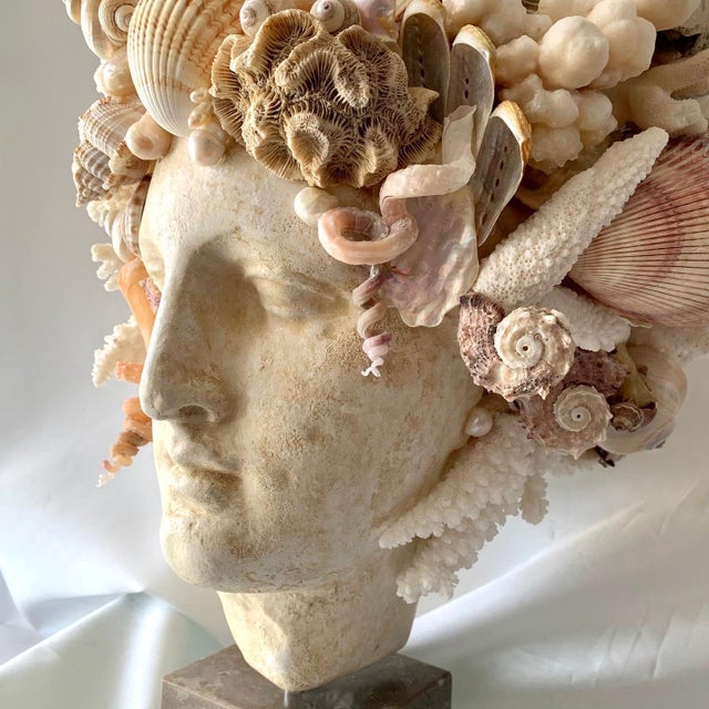 Christa's South Seashells Large Shell Hygiea Bust For Sale - Image 4 of 12