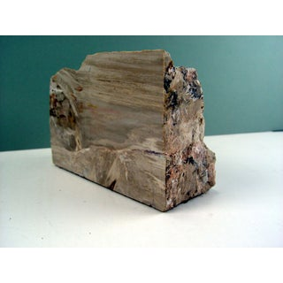 Petrified Wood Specimen Bookend Preview