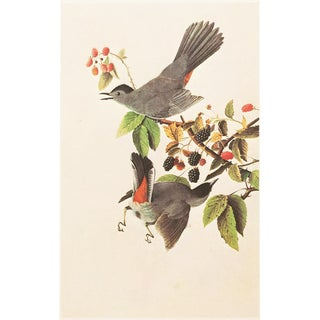 "1966 Cottage Style ""Catbird"" Lithograph by James Audubon For Sale"
