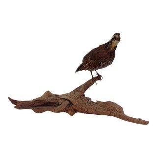 Vintage Taxidermy. Bobwhite Quail on Driftwood For Sale