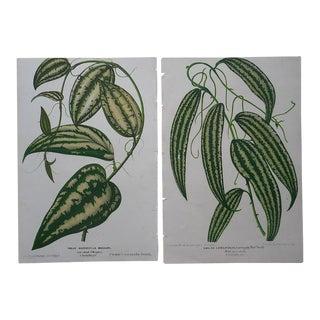 Antique Ornamental Leaves Lithograph - Pair