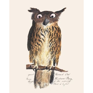 Vintage Owl Print From 1810 Naturalist Collection For Sale