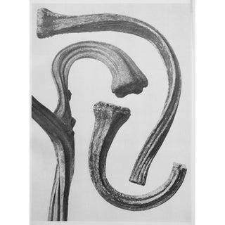 1935 Karl Blossfeldt Two-Sided Photogravure N23-24 For Sale