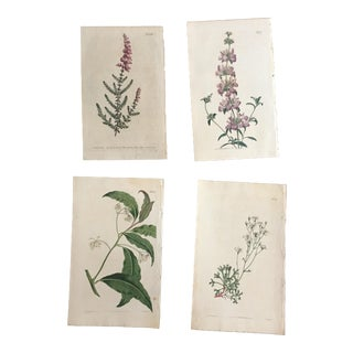 Set of Four William Curtis Hand-Colored Botanical Engravings