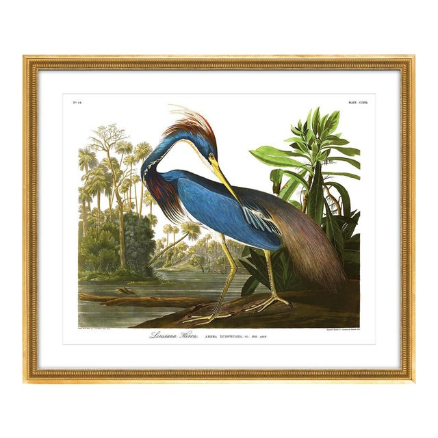 Soicher Marin Louisiana Heron Gold Framed Audubon Print - Image 1 of 5