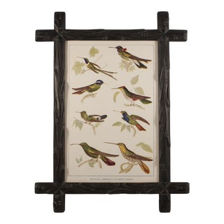 Black Forest Style Frame With Vintage Hummingbird Print