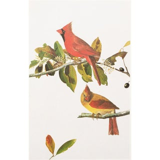 1960s Cottage Style Lithograph of a Common Cardinal Grosbeak by Audubon For Sale