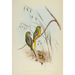 John Gould Print, Chestnut-Shouldered Grass-Parakeet Plate 41 - Hill House Ed. For Sale