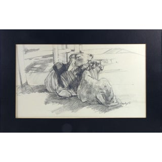 Brahman Cattle Pencil Study For Sale