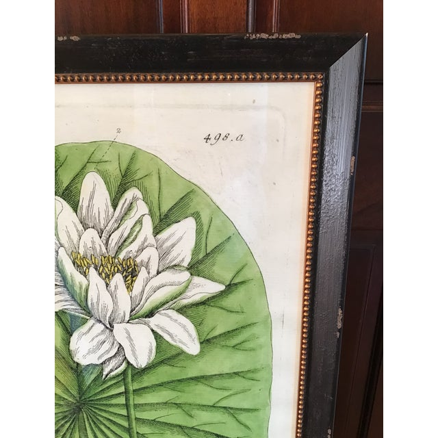 Green Large Turpin Pierre Chaumeton Flore Medicale Print, Framed For Sale - Image 8 of 13