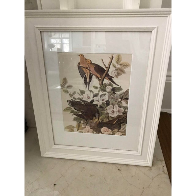 Framed Vintage Bird Prints - Set of 8 - Image 11 of 11