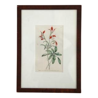 Framed Victorian Botanical Print For Sale