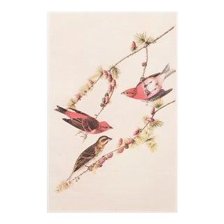 1966 Cottage Lithograph of Purple Finch Lithograph by John James Audubon