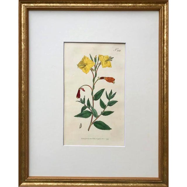English Original Antique Curtis Floral Botanical Etchings C. 1796 - a Pair For Sale - Image 3 of 6
