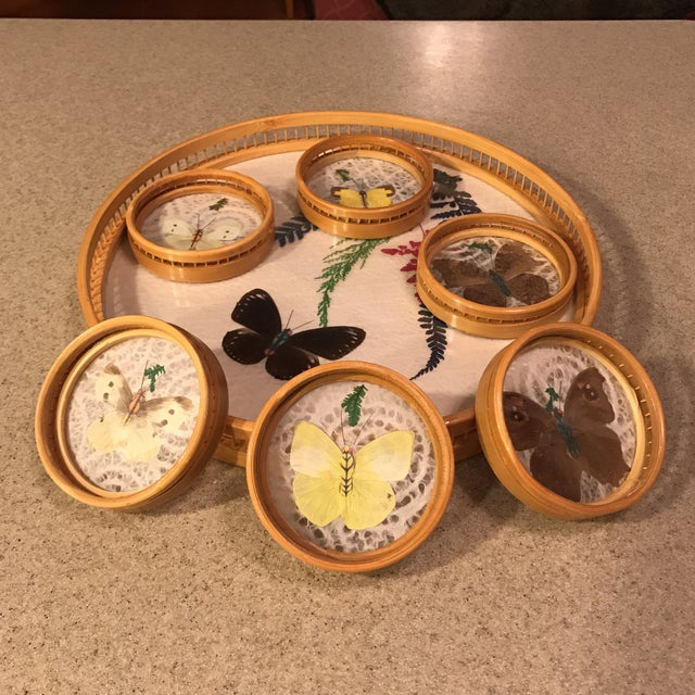 Butterfly Specimen Tray & Coaster Set - Image 2 of 11