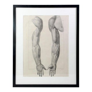 189 Year Old French Anatomy Muscular Arm Study Lithographic Prints - Framed For Sale