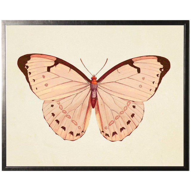 Horizontal Pink Butterfly 2 in Pewter Shadowbox - 25.5ʺ × 19.5ʺ For Sale