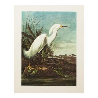 1960s Vintage Snowy Heron Print by John James Audubon For Sale