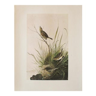 1966 Vintage Cottage Print of Sharp-Tailed Finch by Audubon For Sale