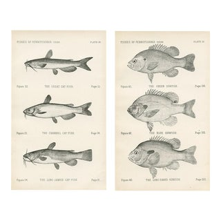 Catfish & Sunfish Lithographs - A Pair For Sale
