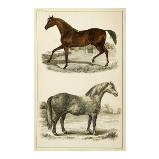1860's English Traditional Print on Paper of Horses by Fullerton Co