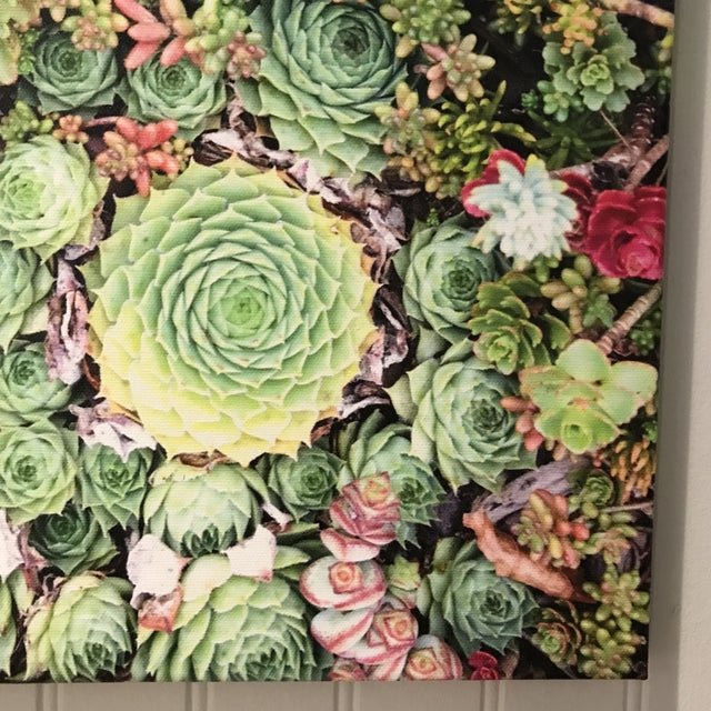 """""""Succulents"""" Photograph on Canvas For Sale - Image 4 of 10"""
