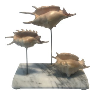 Sea Shell Assemblage on Carrara Mable Base For Sale