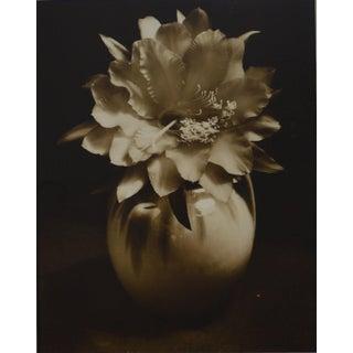 J. Walter Collinge Still Life Hibiscus Vintage Gelatin Silver Print For Sale