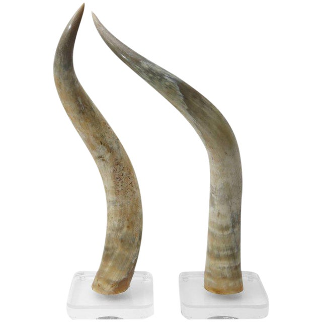 Large-Scale Pair of Steer Horns Mounted on Lucite - Image 1 of 10