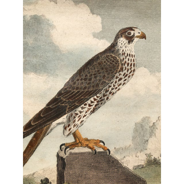 18th Century French Bird Engraving Signed by Jacques De Sève Featuring a Falcon For Sale - Image 12 of 13